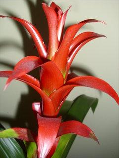FOTKA - Květinářství na sídlišti