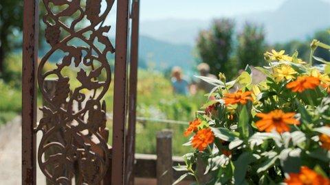 FOTKA - Kouzelné bylinky - Tradice pod Alpami