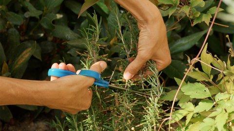 FOTKA - Kouzelné bylinky - Bylinářské koště