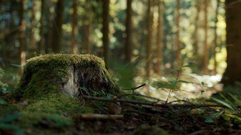 FOTKA - Kouzelné bylinky - Lékař léčí, les uzdravuje
