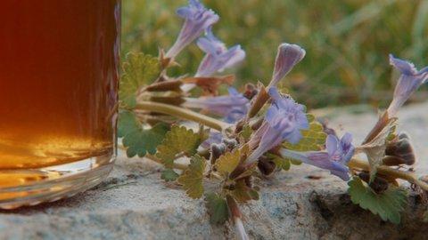 FOTKA - Kouzelné bylinky - Léčivé sirupy