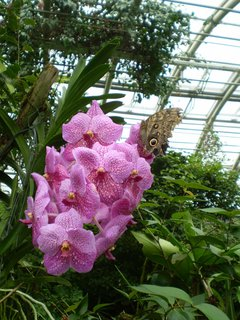FOTKA - Výlet do Prahy do botanické zahrady