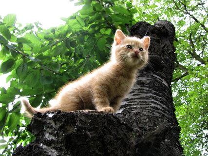 FOTKA - Docela ne(obyčejný) příběh jednoho kotěte