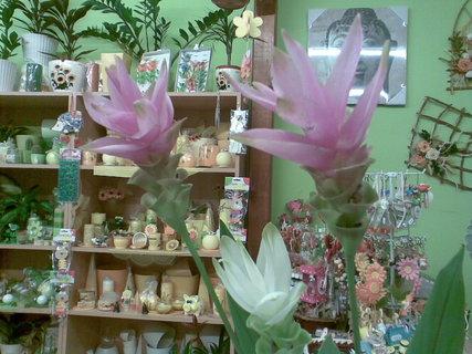 FOTKA - Curcuma se hodí i do vázy