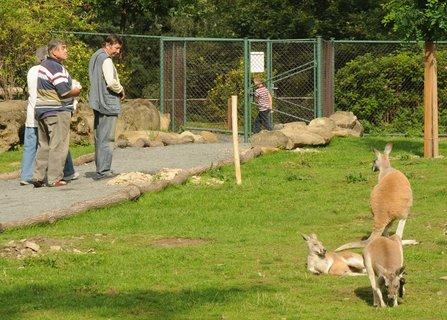 FOTKA - Otevření průchozího výběhu klokanů