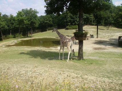 FOTKA - V brněnské ZOO se narodila žirafka