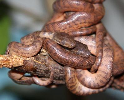 FOTKA - Podzimní hadí překvapení v Zoo Jihlava