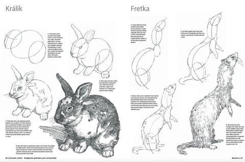 FOTKA - Kreslení zvířat
