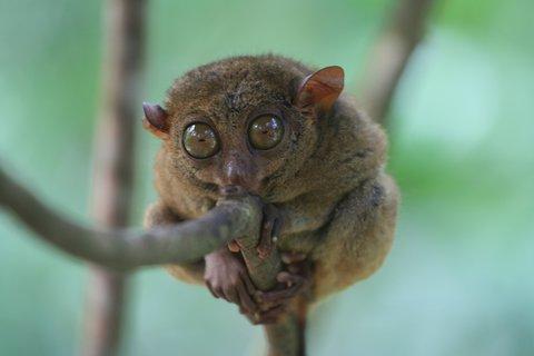 FOTKA - Na vlastní nohy - Honba za klenotem džungle