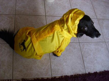 FOTKA - Nákup psí pláštěnky