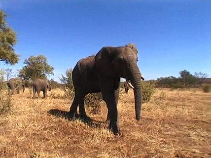 FOTKA - Cestománie - Zambie – U krále králů