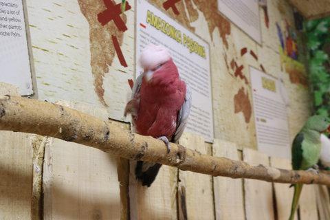 FOTKA - Půlhodinka s papoušky