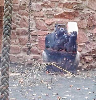 FOTKA - Zoo Norimberk