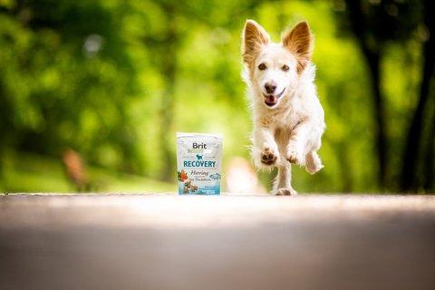 FOTKA - Se psem vdlouhých chvílích: Buďte spolu aktivně