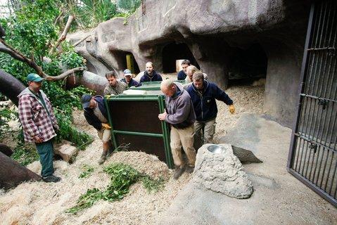 FOTKA - Pražská zoo má nového orangutana