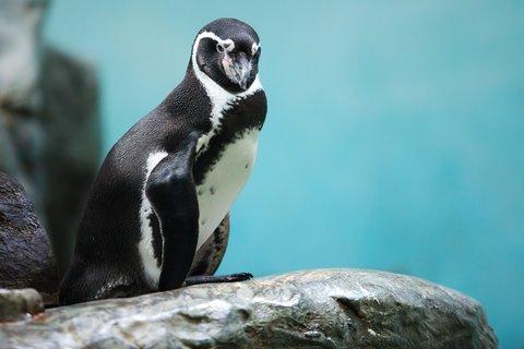 FOTKA - Pozorování a krmení ptáků v zoo