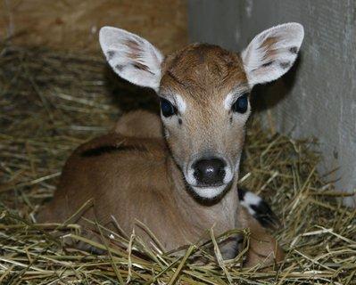 FOTKA - Druhé mládě roku 2011 v Ústecké Zoo