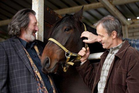 FOTKA - Znamení koně - Rebel