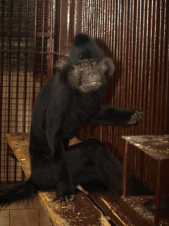 FOTKA - Opičákům je již jednatřicet let!