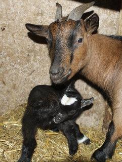 FOTKA - Zoo Jihlava hlásí první letošní přírůstky