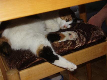 FOTKA - Naše kočka jménem Rys