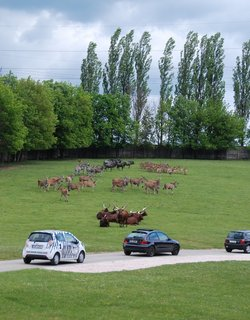 FOTKA - Na safari vlastním vozem poprvé v Česku!