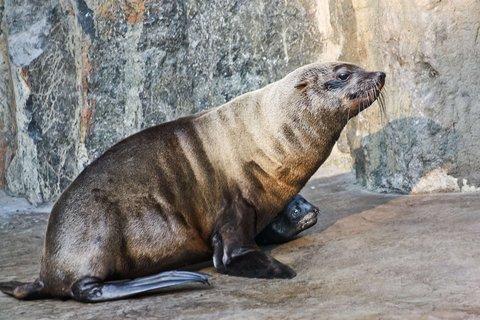 FOTKA - Gastonovo vnouče - V Zoo Praha se narodil lachtan jihoafrický