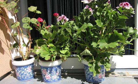 FOTKA - Vyrob si sama - Květináčky na okenní parapet