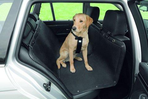 FOTKA - Cestování se psem nemusí být utrpením