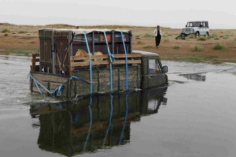 FOTKA - Koně Převalského úspěšně zvládli náročný transport do Mongolska