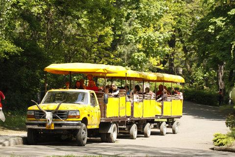 FOTKA - Večerní projížďky Safari expresem již tento víkend