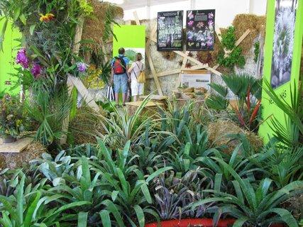 FOTKA - Letní Flora Olomouc 2011: rajský dvůr, bylinkové a voňavé zahrady