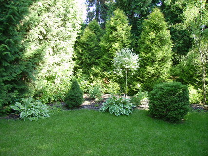 FOTKA - Hosta – královna stinných zahrad