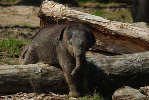 FOTKA - Obvyklý dopolední tělocvik malé Rashmi
