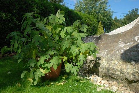 FOTKA - Fíkovníky a jiné teplomilné rostliny v ZOO Ostrava