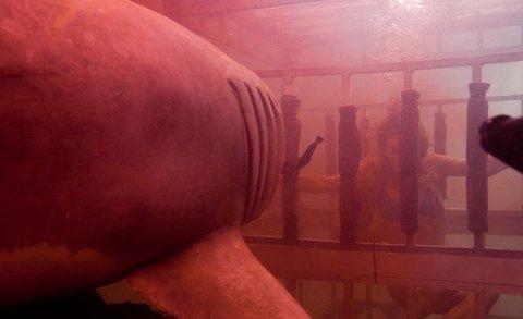 FOTKA - Brzy nastane Noc žraloka 3D