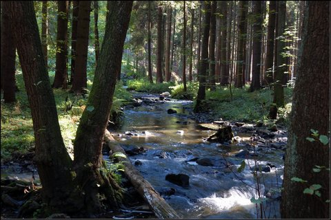 FOTKA - Babí léto v Doubravském údolí