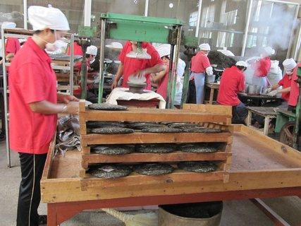 FOTKA - Vydejte se s námi do Číny na čajové plantáže