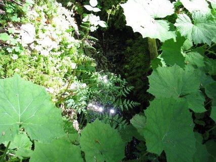 FOTKA - Zázračné studánky: Tajemný Křemešník a jeho okolí