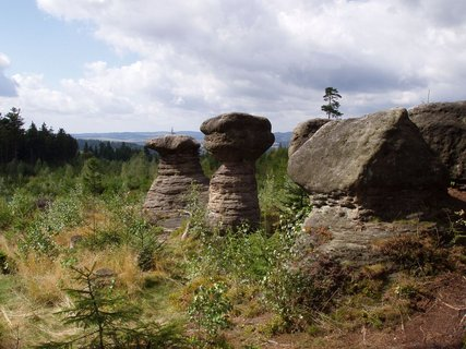 FOTKA - Kde rostou kamenné hřiby