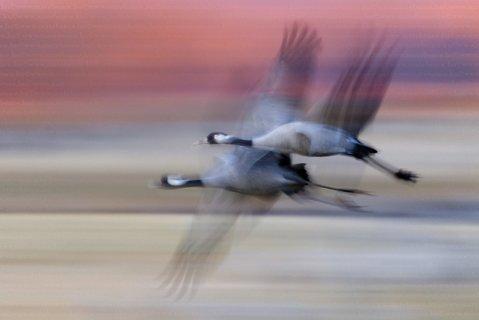 FOTKA - Ptačí paparazzi – unikátní metody neviditelného fotografa