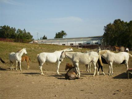 FOTKA - Španělská farma v Andalusii