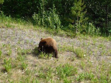 FOTKA - Aljaška aneb hon na medvěda