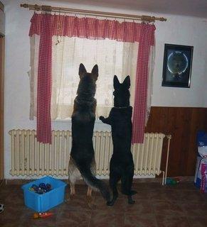 FOTKA - Jak jsem k mým dvěma vlčákům přišla