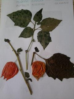 FOTKA - Vyrob si sama: Herbář