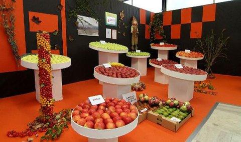 FOTKA - Podzimní Flora Olomouc 2012