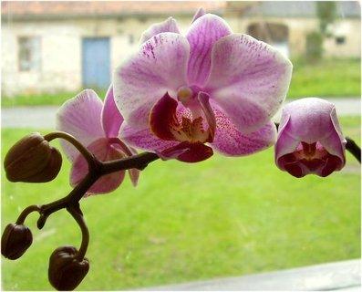 FOTKA - Moje neblahé zkušenosti s pěstováním orchidejí