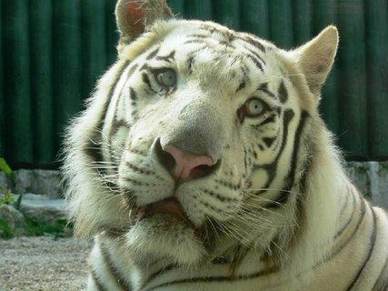 FOTKA - Praxe v liberecké zoo