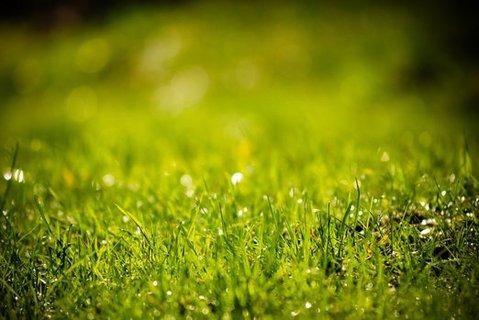 FOTKA - Probouzíme zahradu ze zimního spánku