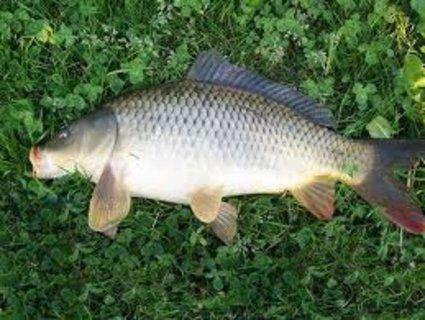 FOTKA - Poprvé na rybách aneb náš skorodědeček